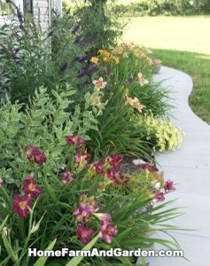 Siloam Purple Prince Daylilies and Moonbeam Coreopsis