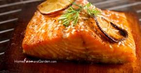 Best Cedar Plank Salmon Recipes