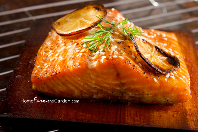 Best Cedar Plank Salmon Recipes