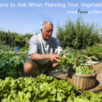 4 Questions to Ask When Planning Your Vegetable Garden