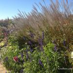 Choosing the Best Plants for Your Garden