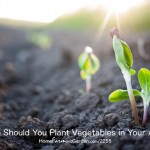 When Should You Plant Vegetables in Your Area?