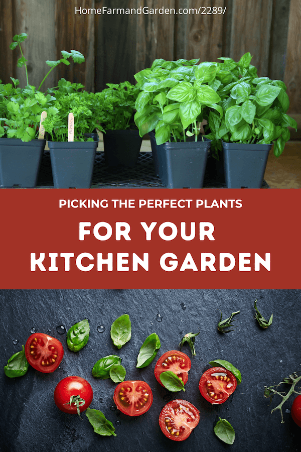 Choosing the Perfect Plants for your Kitchen Garden